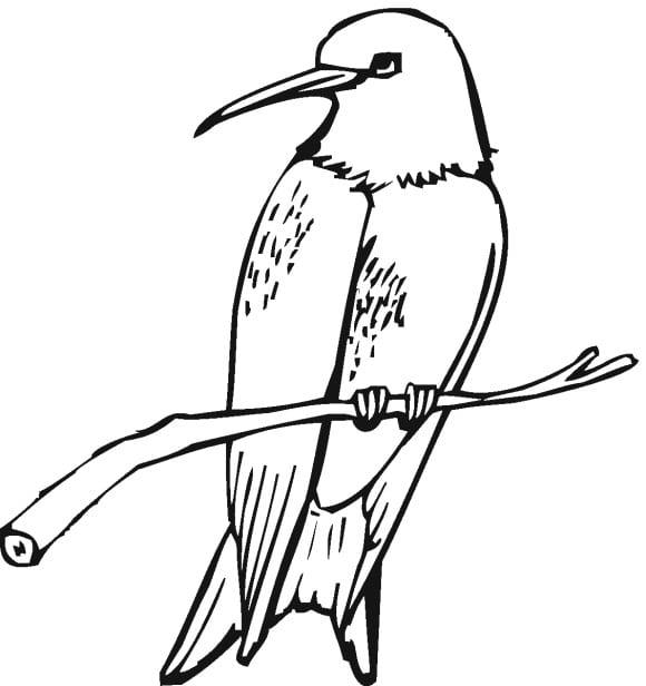 beautiful coloring page hummingbird printable