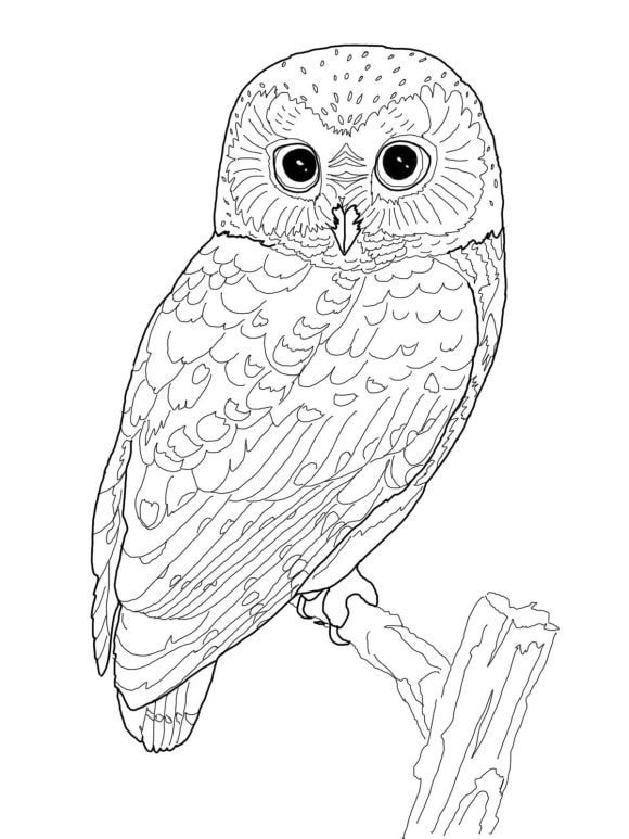 best of coloring page owl hd