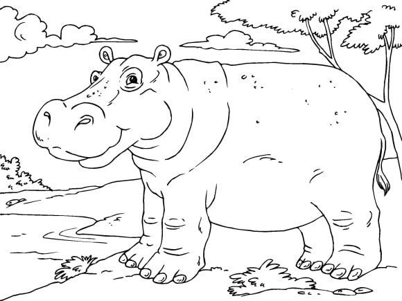 elegant hippo coloring page