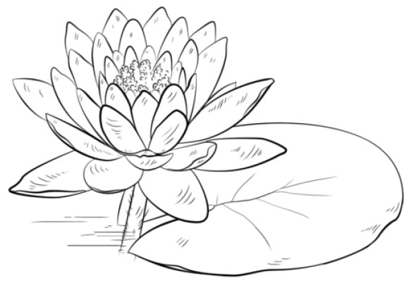 Lily Pad Coloring Page