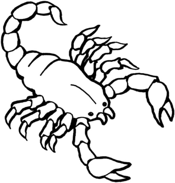 fresh scorpion coloring page
