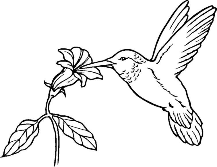 inspirational coloring page hummingbird printable