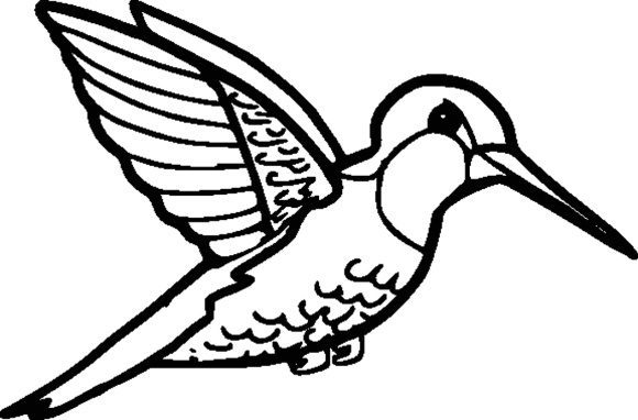 lovely coloring page hummingbird printable