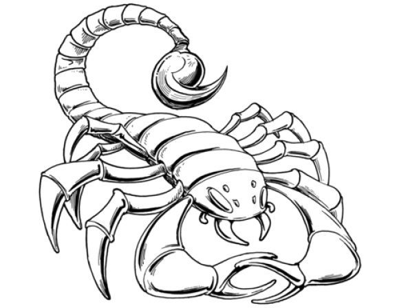 luxury scorpion coloring page 1