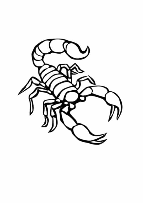 luxury scorpion coloring page