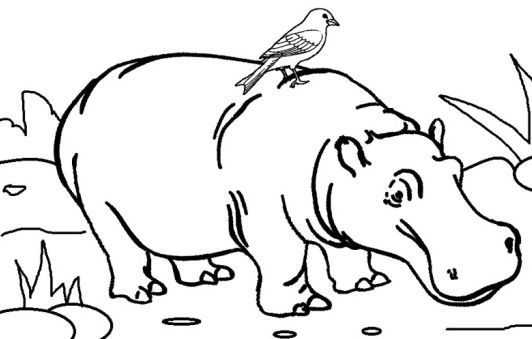 new hippo coloring page