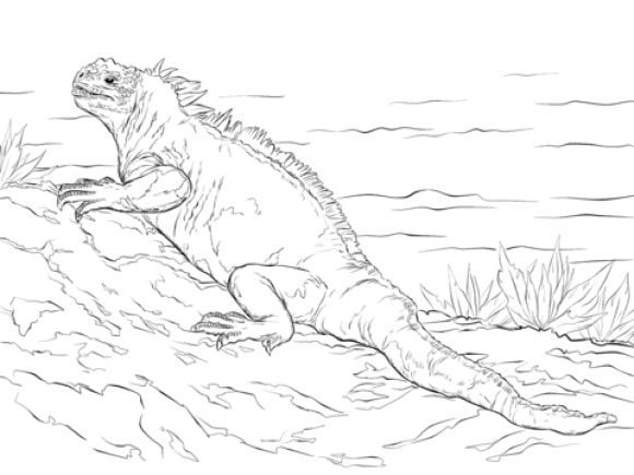 new iguana coloring page 2