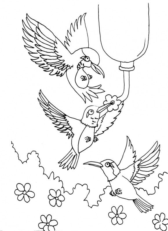 unique coloring page hummingbird printable 1