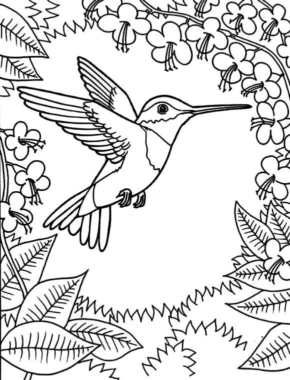 unique coloring page hummingbird printable