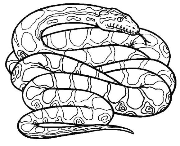 cool rattlesnake coloring page 1