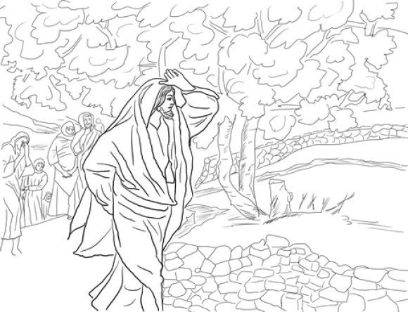 fresh fig tree coloring page