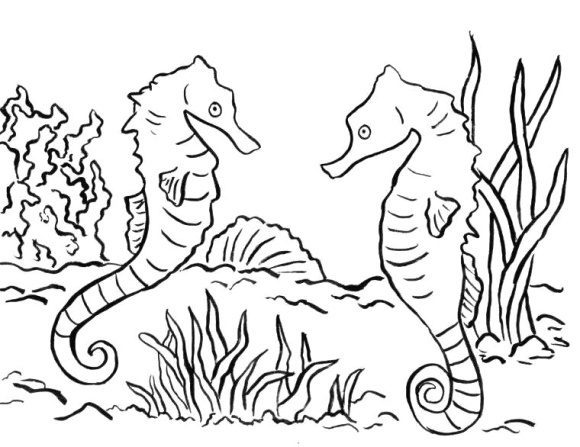 fresh seahorse coloring page 2