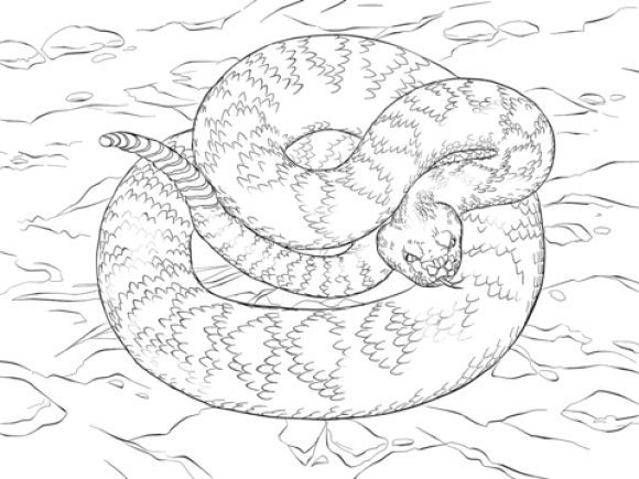 luxury rattlesnake coloring page