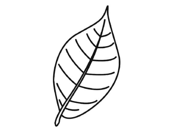beautiful palm branch coloring page