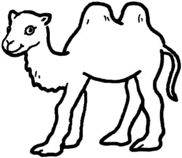 cool camel coloring page
