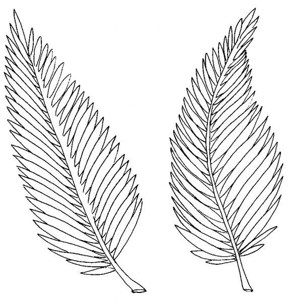 fresh palm branch coloring page