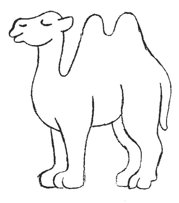 lovely camel coloring page
