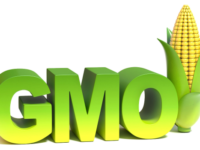GMOs, Global Agribusiness And The Destruction of Choice
