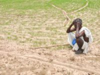 Death Ravages Cauvery Delta Districts: The The Business of Credit
