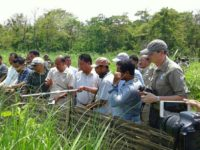 Khampha Borgayari,Deputy Chief of Bodoland Territorial Council(BTC) of Assam releasing the captive breed pygmy hogs in presence of Andrew Terry of Durrell Wildlife Conservation Trust(WCT) UK and Dr.Gautam Narayan,Director Pygmy Hog Conservation Programme(PHCP) of Assam at Bornadi Wildlife Sanctuary of Udalguri on May 29.