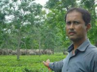 Wildlife Activist Nabajyoti Baruah Strives To Mitigate Man-Elephant Conflict
