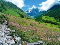 Conserving Healthy Herbs: Lessons From Uttarakhand