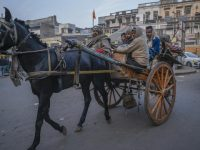 Rare Disease Hits Livelihood of Horse Cart Riders
