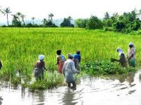 Cooperative farming is the only solution to the present agriculture crisis