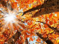Autumnal Equinox – 2018: On the way down