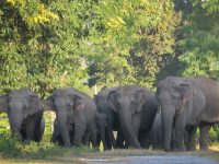 Man-elephant conflict on rise in Udalguri district of Assam