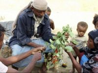 Yemenis eat leaves to stave off famine