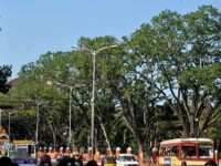 Fond Remembrances of a Student Agitation to Protect Trees