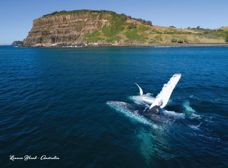Lennox Head Whale Wave Greeting Card (Five Pack)