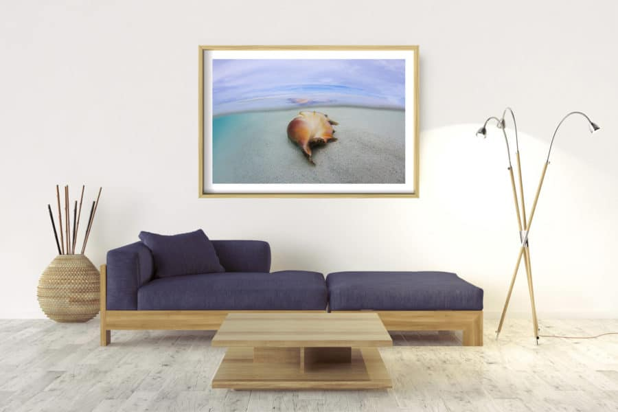 Shell | Pacific Ocean - Box Frame - Raw With Border