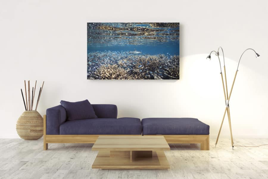 White Tip | Great Barrier Reef Australia - Acrylic Wall Mount