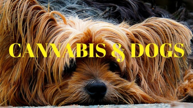 cannabs and dogs