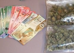 weed and money canada