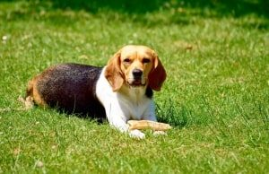 Dog Food For Sensitive Stomach And Diarrhea
