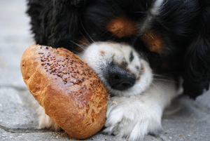 best wet dog food for small breeds