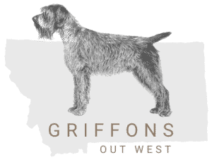 Griffons Out West square logo