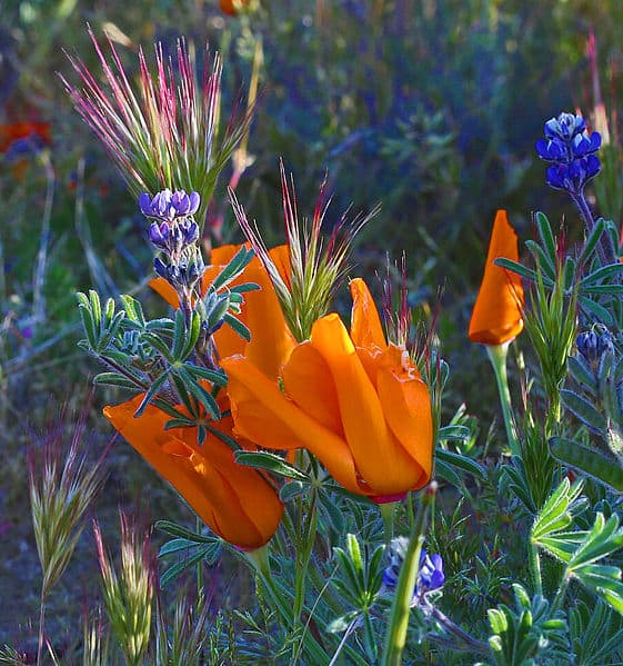The Environmental Impact of Flowers