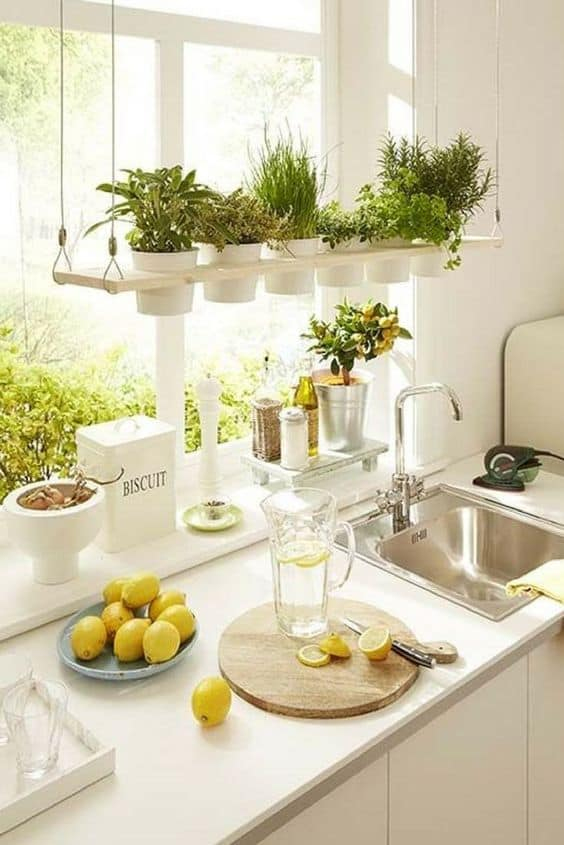 ideas for urban gardening in small spaces