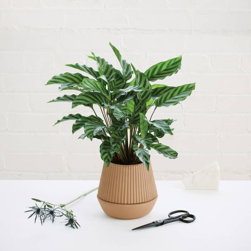 ideas for decorating with plants