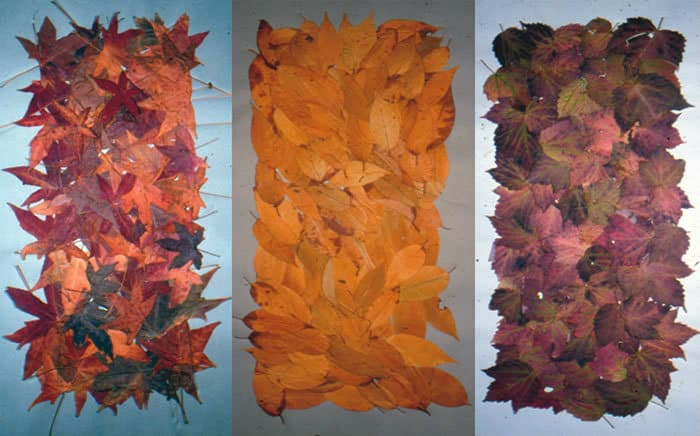 a01-fall-leaves-series