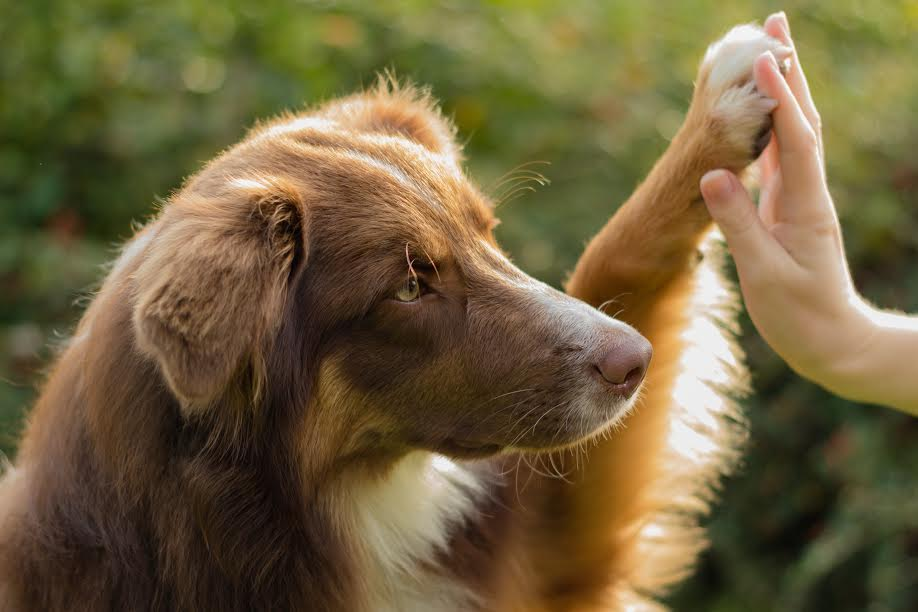 can dogs eat a vegan diet?