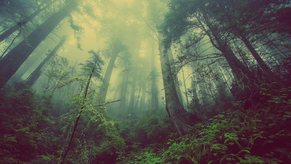 How Forest Bathing Affects Our Health