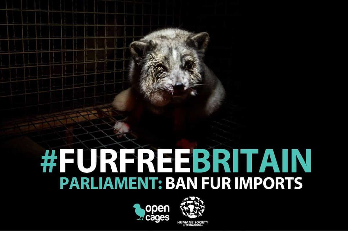 Could Britain Be The World's First Fur Free Nation?