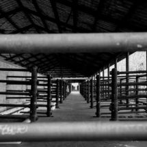 Mental Health of Abattoir Workers