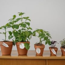 Grow herbs Indoors