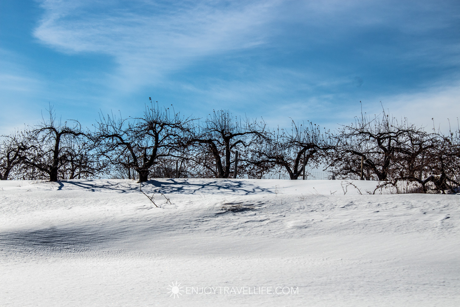 Winter in Bethel Maine | Apple Orchard